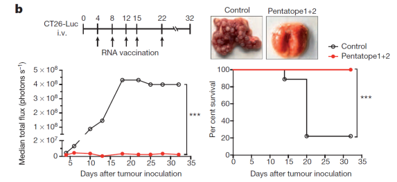 Nature_Personalized Vaccine_Mouse Efficacy_Fig 3b