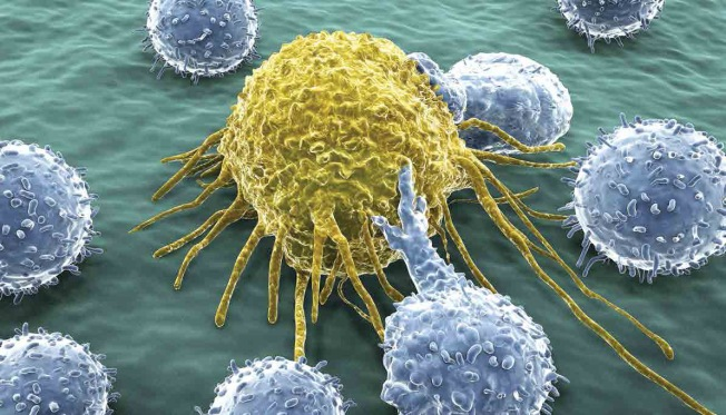 T-Cells Attacking Cancer_Not Copyrighted