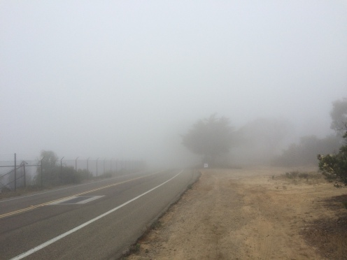 Foggy Run