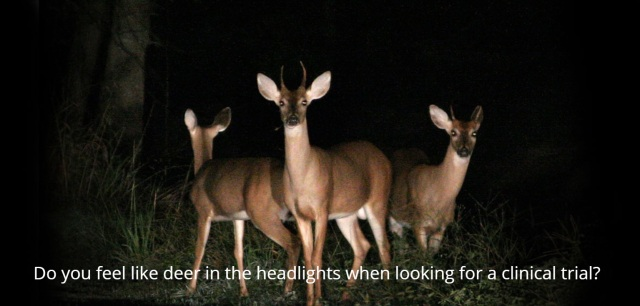 Deer in Headlights
